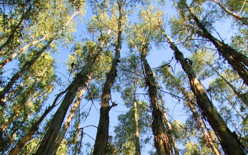 Área Forestales - Inversiones - Group Machiels